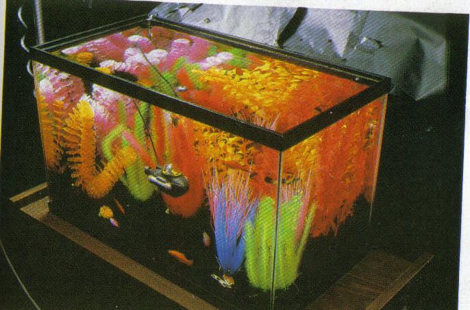 Setting Up Your Aquarium